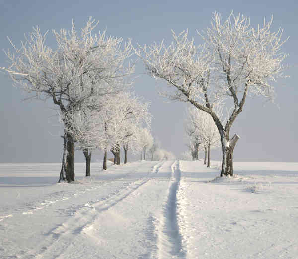 Sm Snow Trees