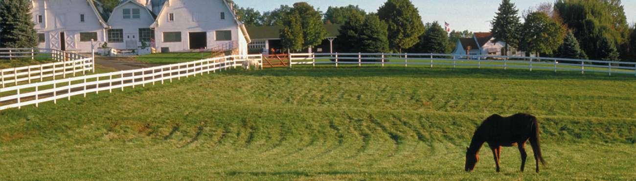 Sub Horse Farm